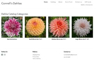 screenshot of the Connell's Dahlias website