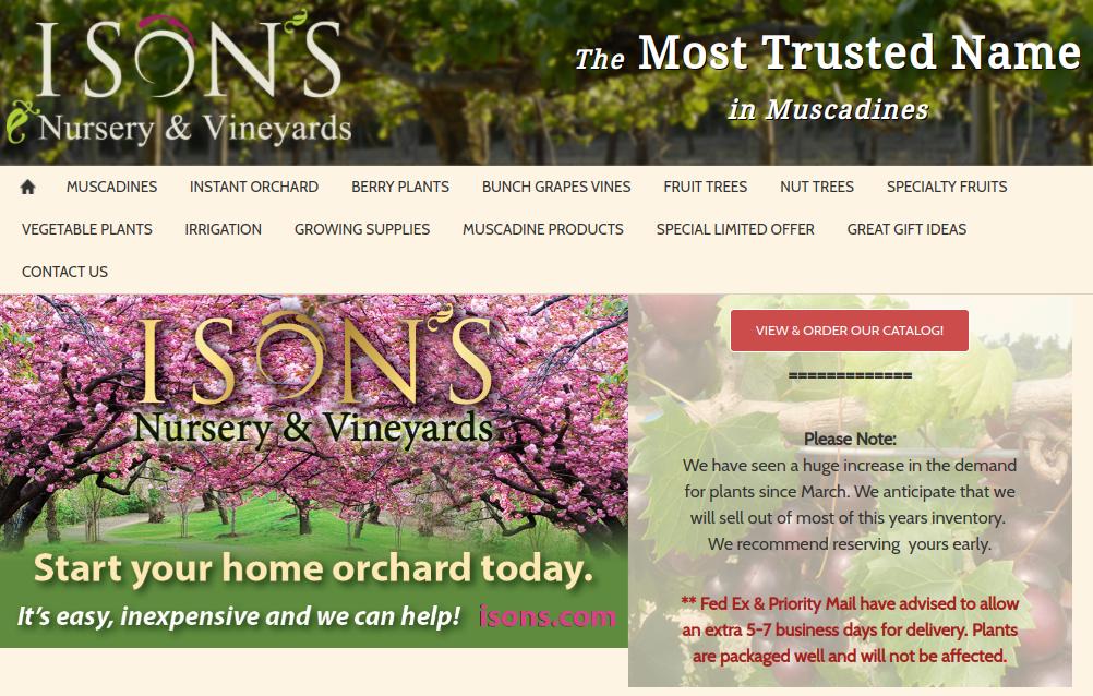 screenshot of Ison's website