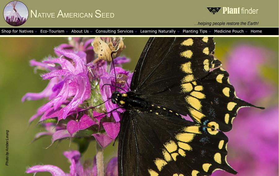 screenshot of Native American Seed website